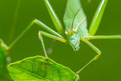 strange grasshopper - stock photo