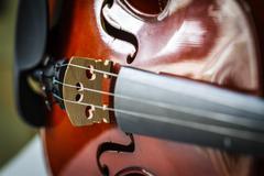 strings violin - stock photo