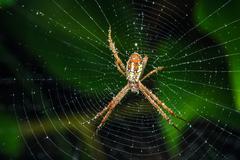 Spider on the web Kuvituskuvat