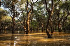 Tonle sap mangrove forest Stock Photos
