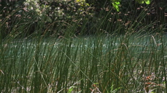 Green grass Krka river Stock Footage