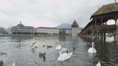 Switzerland Lucerne swans in Reuss River Stock Footage