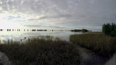 Tampa Bay Wetlands Stock Footage