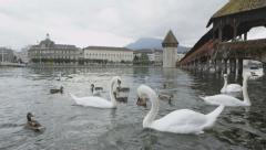 Lucerne Switzerland swans in Reuss River by Kapellbrucke  and Wasserturm Stock Footage