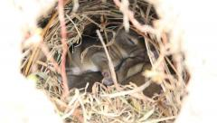 Cute wild baby bunnies cuddling in a rabbit hole. Zoom in to close-up. Stock Footage