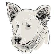 head, muzzle the dog. shepherd. sketch drawing. black contour on a white back - stock illustration