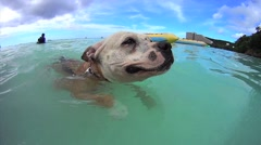 Dog swimming doggie paddle Stock Footage
