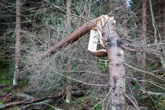 Storm broken tree Stock Photos