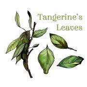 Watercolor leaves set Stock Illustration