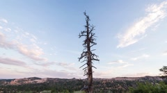 Barren Tree Sunset at Bryce Canyon Stock Footage