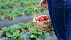 Strawberry basket Stock Footage