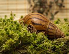 Albino snail Stock Photos