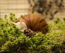 Albino snail - stock photo