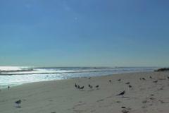 Birds play along Cocoa Beach.  Early morning Stock Footage