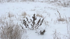 Prairie in the Winter season Stock Footage