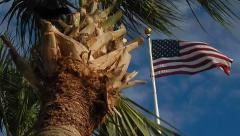 American flag flying next to palm tree Stock Footage