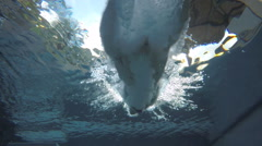 Diving into Pool Swimming Stock Footage