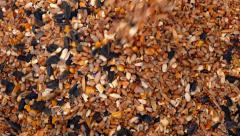 Pouring Grain And Seeds Stock Footage