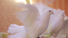 Performance of white doves Stock Footage