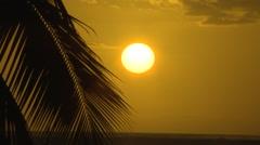 Fiji, Viti Levu, Sun Palm Frond Silhouette Stock Footage