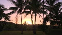 Fiji, Viti Levu, Tall Palm Trees at Sunset Stock Footage