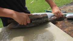 Filleting Fish on Micronesian Island of Yap Stock Footage