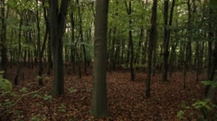 A short pan in the autumn woods Stock Footage