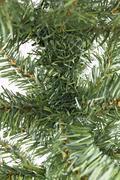bare christmas tree - stock photo