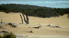 Fraser Island Queensland Australian landscape scenic Stock Footage