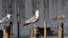 Seagulls over the poles to anchor boats Stock Photos