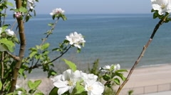 White Flowers at Sea  Shore Stock Footage