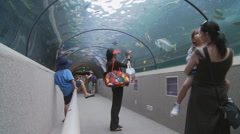Young girl points at sea life in Sydney Aquarium Stock Footage