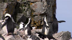 Chinstrap Penguins, Antarctica Stock Footage