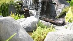 Mini garden ,creek and water fall Stock Footage