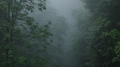 Dark Fog in Forest Stock Footage