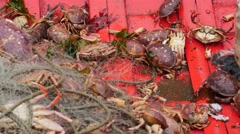 Crabs on the bottom of a boat Stock Footage