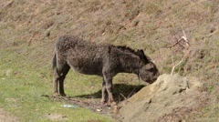 Donkey Looking to You Stock Footage