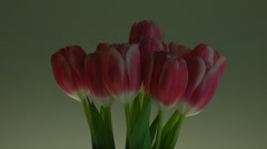 TULIPS CLOSE-UP ROTATING - stock footage