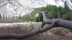 Yosemite National Park, dead branch pointing Stock Footage