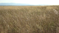 Parched Plain on Sunny Afternoon - stock footage