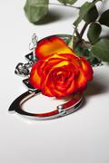 handcuffs with a rose - stock photo
