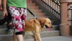 People and Dogs Descending Stairs Stock Footage