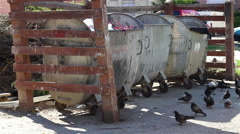 Pigeons at Dumpsters yard Stock Footage