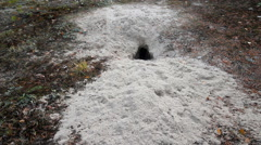 Foxhole in  sand on  shore Stock Footage