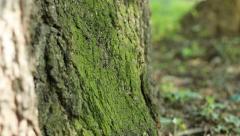 Shadows Flicker on Tree Moss Stock Footage
