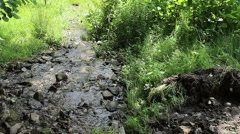 Spring Flows the River Stock Footage