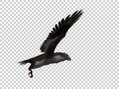 Falcon Hawk 3d Model Flying 03 Arkistovideo