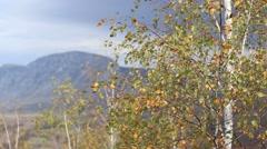 Sunny Golden Autumn Canopy Stock Footage