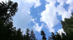 Tall Pines and Fast Clouds Stock Footage