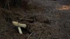 Toxic Mushroom in the Woods Stock Footage